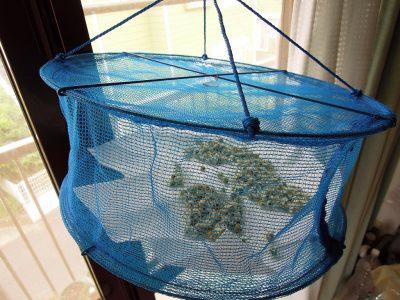 カモミールの花を野菜干しネットで乾燥させる
