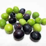 我が家のオリーブの1本、ピッチョリーネの実を収穫し、渋抜きにチャレンジする