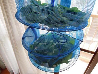 レモンバームの葉をダイソーで売っている「野菜干しネット」で乾燥させる