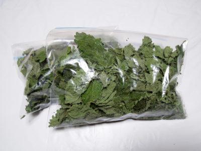 乾燥したレモンバームを保存袋に入れ、冷蔵庫へ
