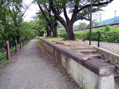 ホーム跡は桜並木になっている