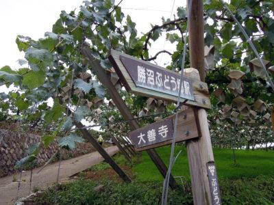 国宝の大善寺に向かってぶどう郷遊歩道を進む