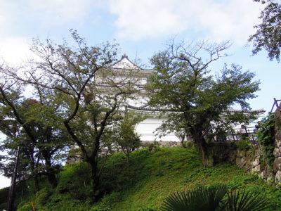 漁港の帰りに久しぶりに小田原城に立ち寄る