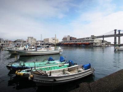 朝市会場の前から眺める漁港の風景