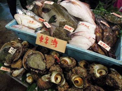 東京湾の魚介の展示