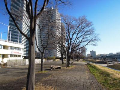 ポートサイド公園を通って横浜中央卸売市場に向かう