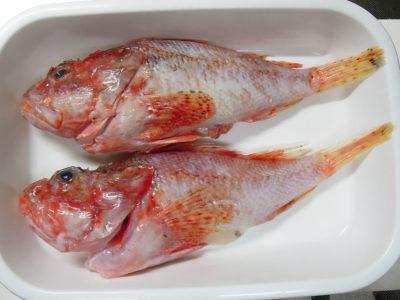 弘明寺商店街の鮮魚店・作清で購入したかさご