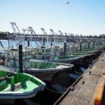 柴漁港の「小柴のどんぶりや」を目指すが当てが外れ、リニューアルの「ブランチ横浜南部市場」にたどり着き、自宅で八角の刺身を味わうことに