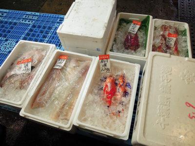 山本水産の鮮魚、金目やほうぼうなど