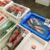 月2回の一般開放日に横浜中央卸売市場・水産物部を訪れ、本まぐろのカマや鯛の頭と中骨を買ってくる
