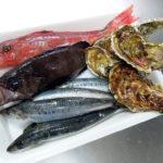 横浜中央卸売市場・水産物部の一般開放日に購入した牡蠣、黒めばる、ほうぼう、いわしで刺身、蒸し牡蠣、いわしと菜の花のソテー、魚介のスープなどをいただく
