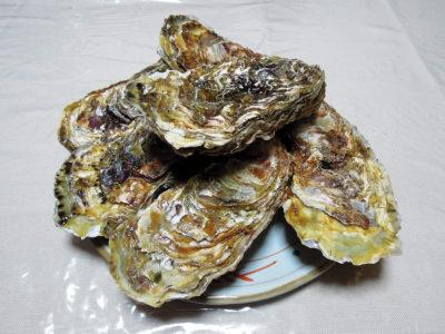 横浜中央卸売市場の一般開放日に買ってきた牡蠣