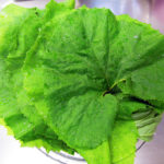 体調を管理し、免疫力を上げるための試み:いただきもののふきで、ふきの葉とじゃこの煮ものをつくり、苦み成分の抗酸化作用や免疫力を高める作用を知る