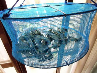ミント ベリーズ&クリームを野菜干しネットに入れて陰干しする