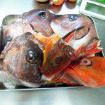 イタリアやスペインの魚介料理をつくるために常備しておきたい魚のブイヨンを、鯛やほうぼう、あかはたのあらと野菜でつくり、冷凍保存する