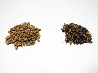 左からミルクシスルとダンデリオン(ダンディライオン)リーフ