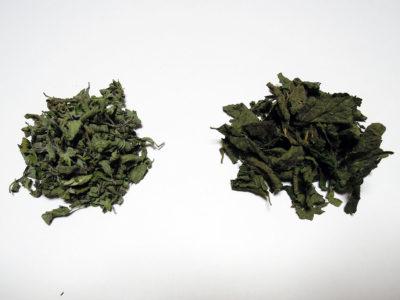 わが家で収穫し乾燥させたオレガノ(左)とレモンバーム(右)