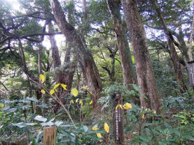 「かながわの美林 長興山鉄牛和尚寿塔周辺の森」