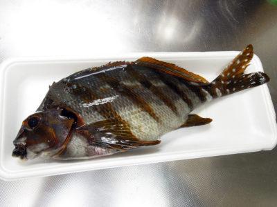 横浜橋商店街の黒潮で購入したたかのは鯛