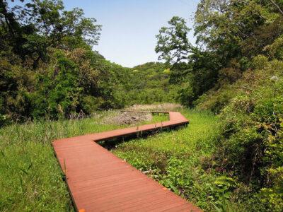 まんなか湿地と散策路