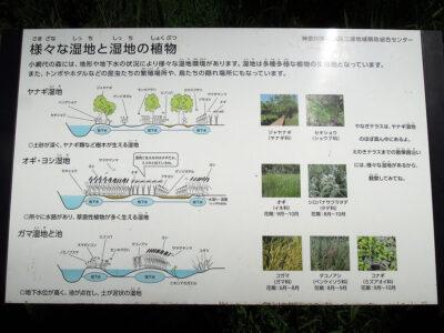 様々な湿地と湿地の植物