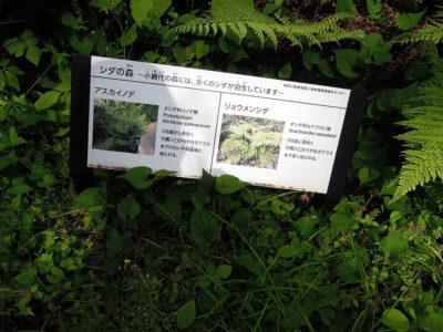 シダの森の案内板