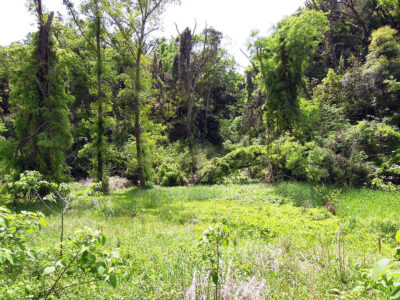 まんなか湿地周辺の林