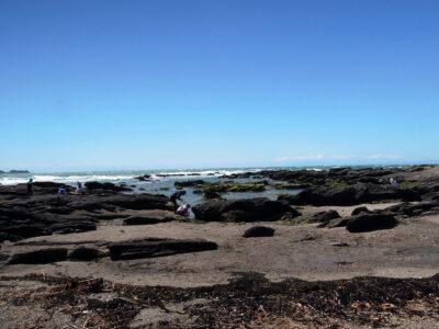 天神島にわたり、磯場などを散策